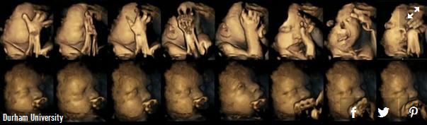 babies react